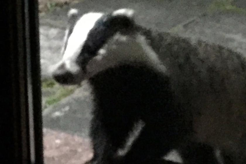 Visit Plockton Pitnacree Cottage Badger